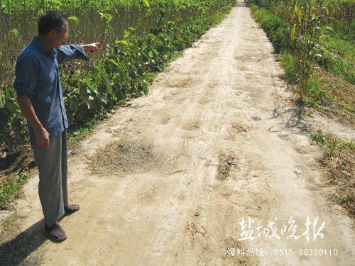 射阳90年代老路年久失修 400农户出行难