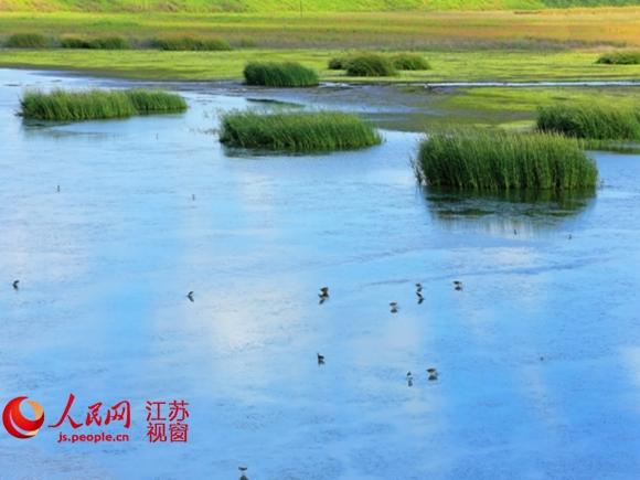 江苏海门:活水清流成为一道流动的风景