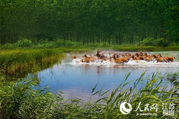 江苏湿地保护:经济生态两手硬 绿水青山长相依