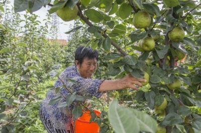 南通海安大公镇打造果香特色小镇 致富农民