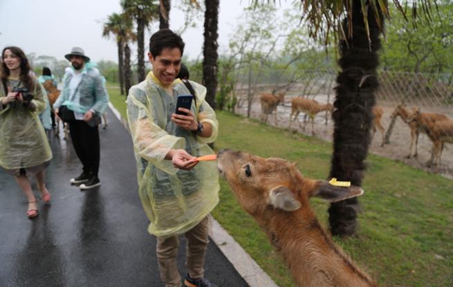 洋眼看江苏大丰行:外籍人士零距离接触麋鹿