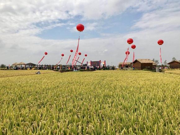 农业科技和三农2000字_怀化三农科技信息网_南宁三农科技信息网