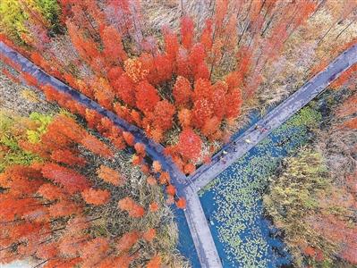 初冬时节徐州潘安湖湿地公园色彩斑斓如画卷