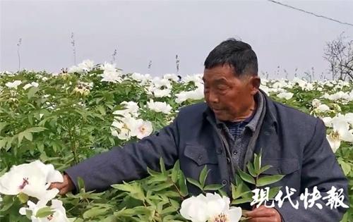 宿迁泗洪80岁老人为亡妻种6000株牡丹花插图