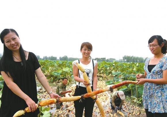 连云港浦南镇780万元建起大学生村官创业园
