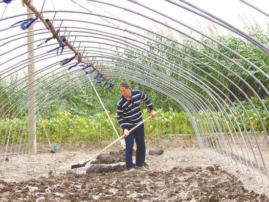 东台市梁垛镇依靠科技种植大棚蔬菜