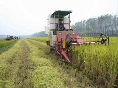 东海县平明镇早熟水稻开始收割