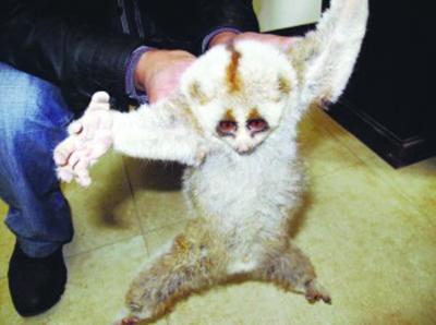 系国家一级野生保护动物