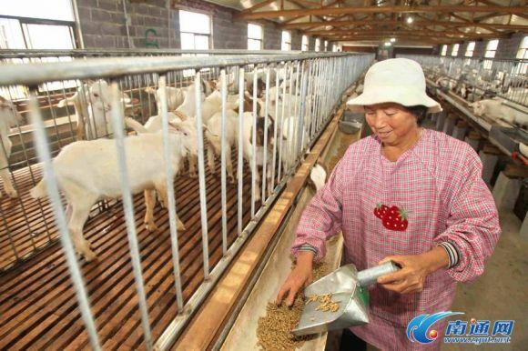 养羊场羊圈设计图展示