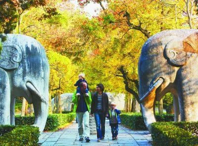 南京秋色正浓,市民纷纷来到东郊风景区欣赏秋色.董小强,徐琦 摄