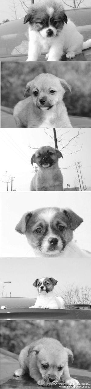 苏州小动物保护协会领养协议