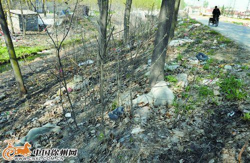 徐州动物疫病防控中心:目前无生猪疫情