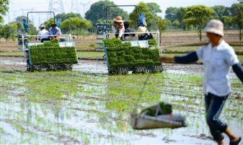 泰州姜堰兴泰镇出动60台插秧机突击抢种抢栽