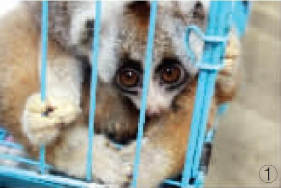 镇江小伙网上叫卖国家一级保护动物懒猴被拘