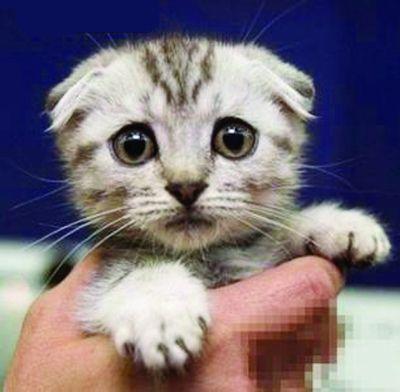 南京小猫不吃鞭炮声盘头春节不堪不喝瘦3斤惊吓美女图片