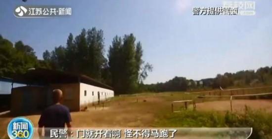 """天降宝马!南京六合玉米地里来了两匹""""伊犁马""""价值上百万泥人张作品"""