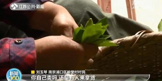 南京浦口有个栀子花村!近百亩花田端午盛放曾国藩书法